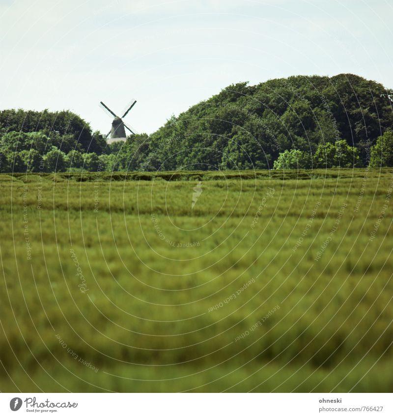 Mühlhausen Landschaft Sommer Baum Feld Wald Mühle Windmühle Windmühlenflügel Idylle nachhaltig Landleben Farbfoto Außenaufnahme Menschenleer Textfreiraum oben