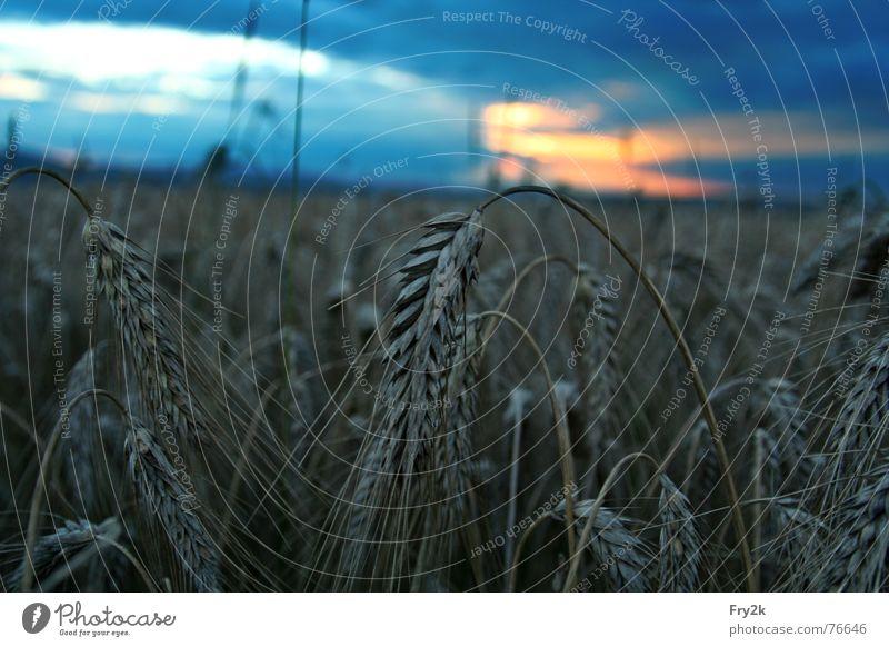 Spätsommer Wolken Feld Hafer Nacht dunkel Wiese Sommer Herbst spät Dämmerung Himmel Getreide sunshine Abend Sonne breitungen
