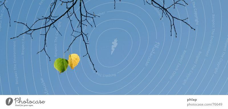 herbstende Himmel Baum grün blau Blatt gelb Herbst 2 Ende Abschied Zweig Herbstlaub