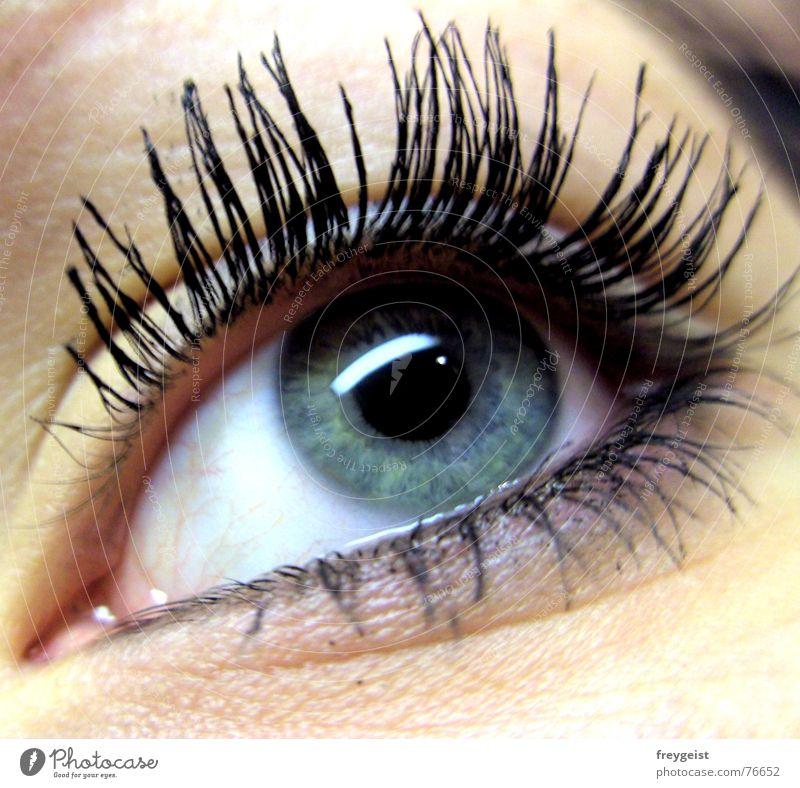 Augenaufschlag Frau blau grün weiß Blick schwarz Erwachsene Gesicht Auge grau See glänzend Haut Wimpern Aufschlag