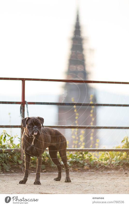 Turmwächter Hund Stadt Tier Aussicht Kirche Schutz Sicherheit Geländer Bauwerk Tiergesicht Wachsamkeit Haustier Kontrolle Wahrzeichen Sehenswürdigkeit