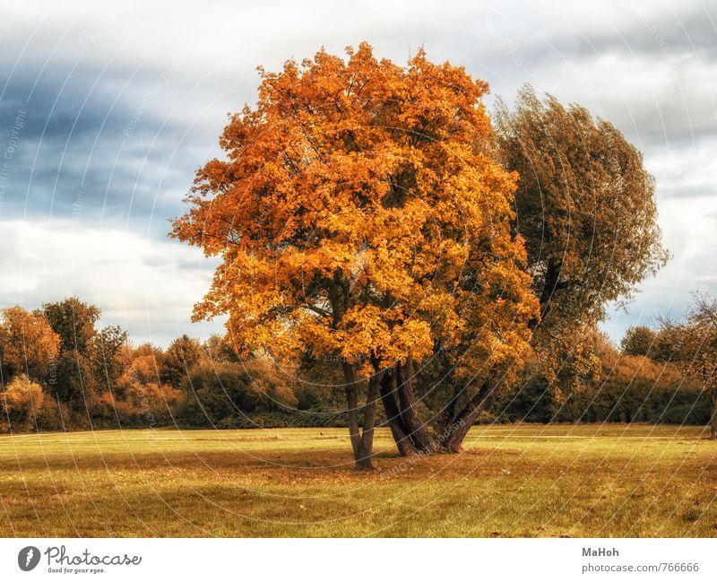 Herbst Erholung ruhig Natur Landschaft Baum Park Stadtrand Menschenleer natürlich braun gelb Gefühle Zufriedenheit Romantik Gesundheit Ferne Sinnesorgane