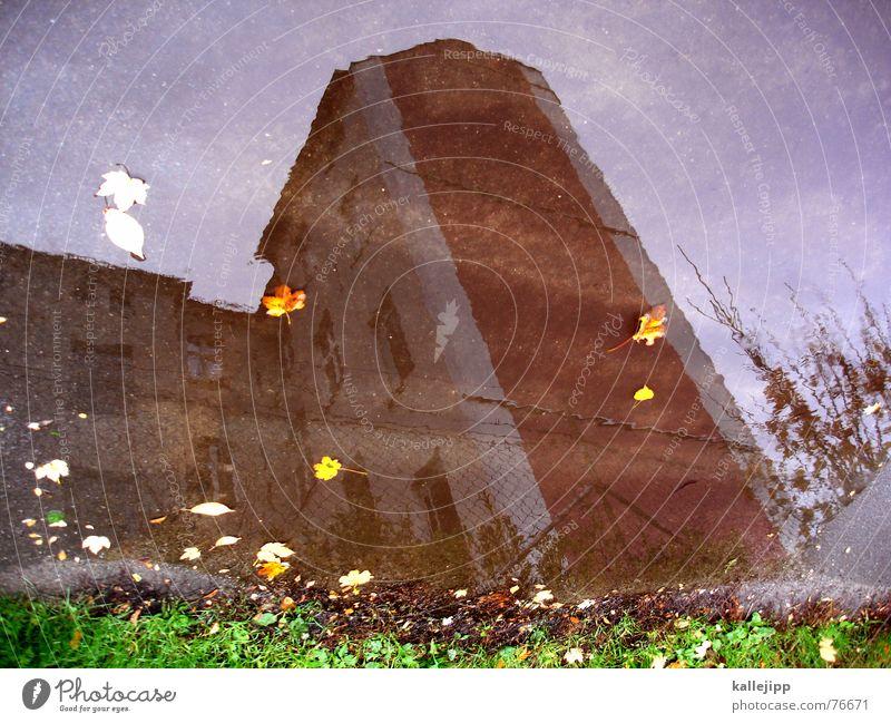 himmel über berlin II Haus Pfütze Blatt Herbst Oktober Wand Pankow Himmel bild um 180 grad gedreht Rasen wedding kallejipp