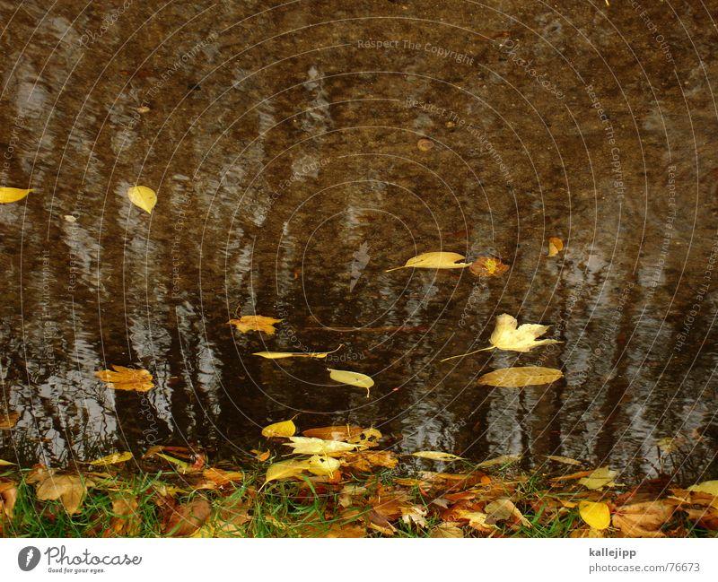 himmel über berlin III Baum Pfütze Herbst Oktober Blatt schlechtes Wetter Regen bild um 180 grad gedreht Rasen kallejipp