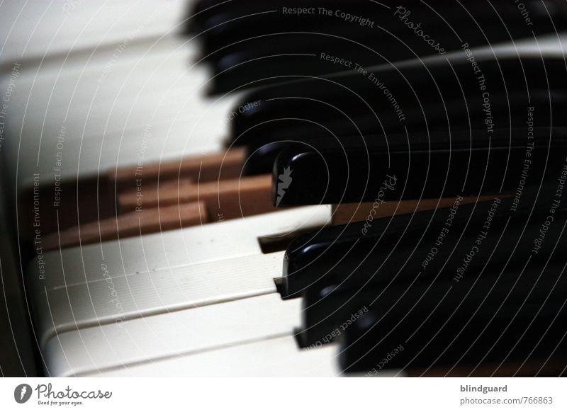 Ebony & Ivory Freizeit & Hobby Musik Musiker Kunst Bühne Klavier Keyboard Akkordeon Holz Kunststoff authentisch glänzend kaputt braun schwarz weiß Senior