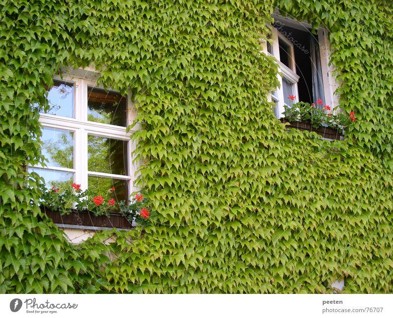 Fenster im Grünen grün Pflanze Blatt Fenster Freiheit Gebäude geschlossen offen eng ökologisch Lebensqualität Neuruppin