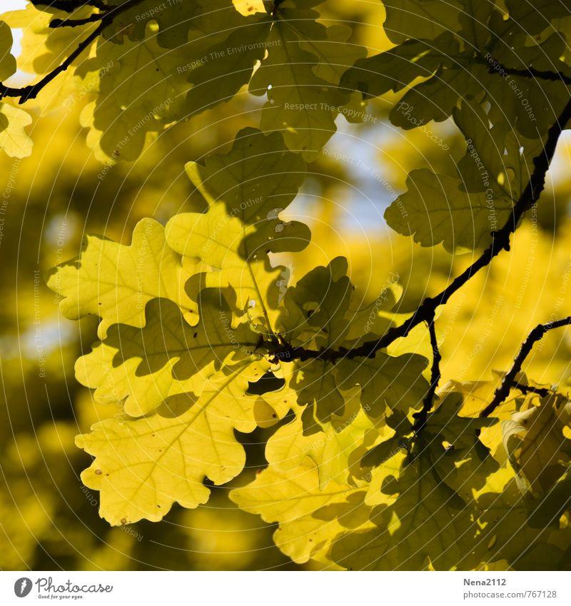 Sunny day Umwelt Natur Pflanze Luft Frühling Sommer Herbst Schönes Wetter Baum Blatt Garten Park Wald gelb Eiche Eichenwald Frühlingsgefühle Frühlingsfarbe