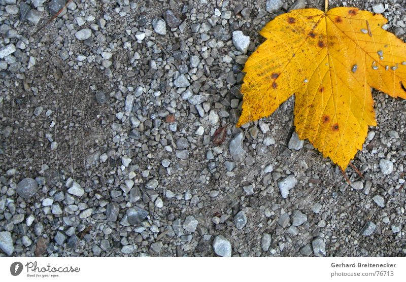 Demo gegen Grau Winter ruhig Blatt Einsamkeit gelb Herbst grau Stein orange Bodenbelag liegen fallen Kies einzeln