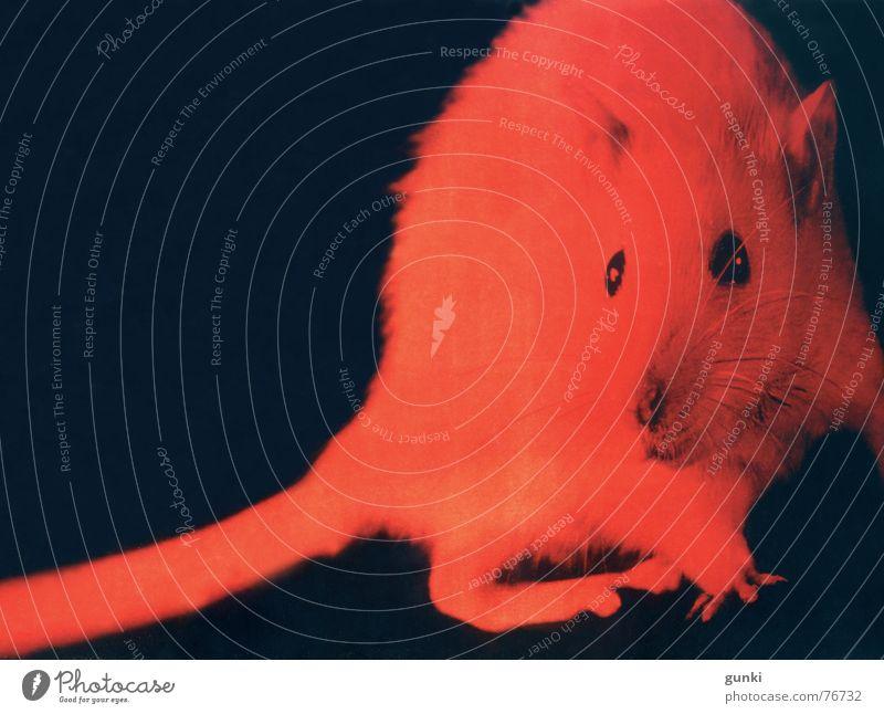 Zufallstreffer rot Tier dunkel gruselig Maus Halloween Ratte