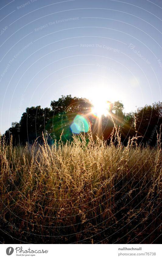 sonnenuntergang Sonnenuntergang blau Abenddämmerung Baum Wiese Kornfeld Feld Gegenlicht Himmel Schönes Wetter Blendenfleck