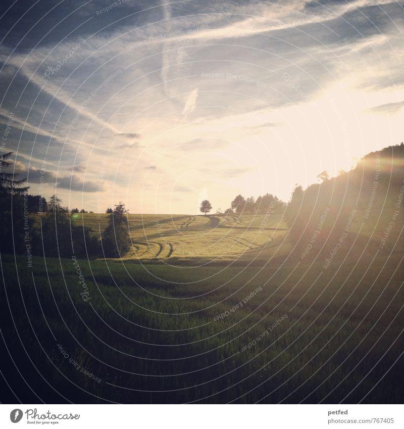 Herrlichkeit der Schöpfung Freiheit Sommer Landschaft Himmel Horizont Schönes Wetter Sträucher Feld Ernte Unendlichkeit schön Wärme blau gelb gold grün Stimmung