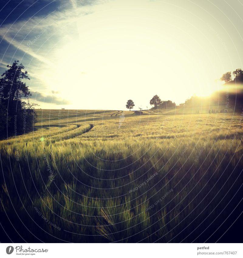 Des Schöpfers Herrlichkeit Sommer Landschaft Himmel Horizont Sonnenaufgang Sonnenuntergang Schönes Wetter Baum Sträucher Feld Unendlichkeit schön Wärme blau