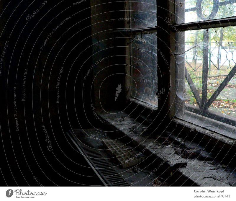 Glasklar. Klarheit Fenster Leitersprosse Sprossenfenster Ruine dreckig trüb dunkel Herbst Treptow Treptower Park Fensterbrett Trauer schön Spinnennetz Staub