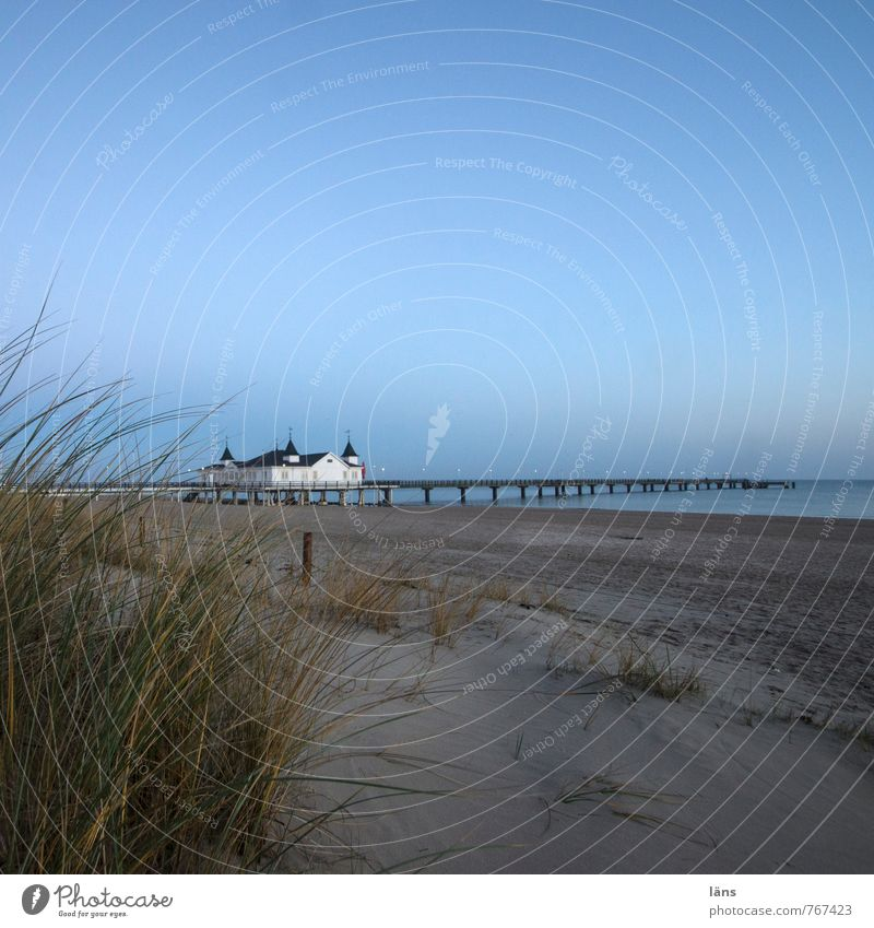 am morgen Ferien & Urlaub & Reisen Tourismus Ausflug Strand Meer Insel Winter Umwelt Natur Landschaft Sand Luft Wasser Himmel Wolkenloser Himmel Gras Dünengras