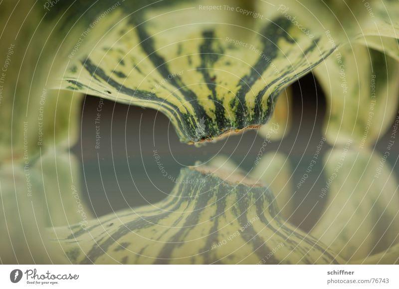 Kürbis 6 Herbst Spiegel grün gestreift Muster Reihe zierkürbis spiegellung