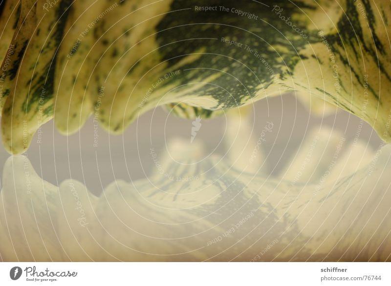 Kürbis 7 grün Tier Herbst Streifen Spiegel Kürbis Tausendfüßler