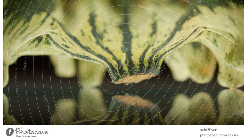 kürbis 8 Spiegel Herbst grün gestreift Muster eng Pflanze Tier Reihe Kürbis zierkürbis spiegellung Fuß