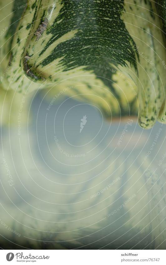 Kürbis 9 Herbst Spiegel grün gestreift Muster zierkürbis spiegellung