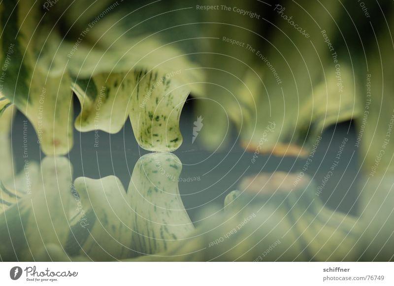 Kürbis 10 Spiegel Muster grün Herbst Reihe zierkürbis spiegellung Fuß Tausendfüßler