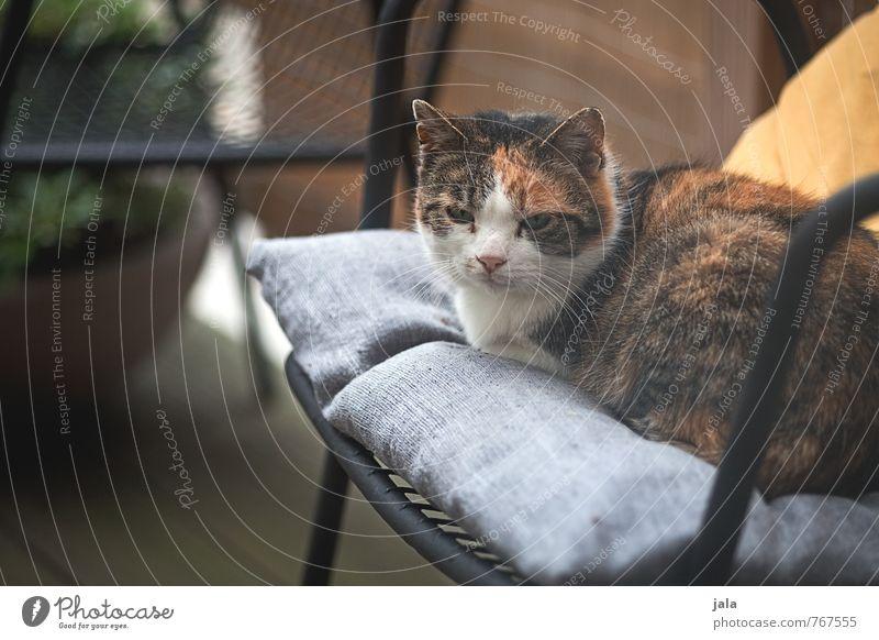 katzel Stuhl Terrasse Tier Haustier Katze 1 liegen sitzen Farbfoto Außenaufnahme Menschenleer Tag Tierporträt Blick nach vorn