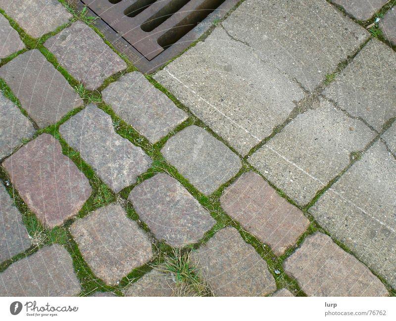 ein klassischer lurp Umwelt Pflanze Grünpflanze Stein unten braun grau grün rot Kopfsteinpflaster Regenrinne Gully Wasserrinne Bodenbelag Kiel Bürgersteig