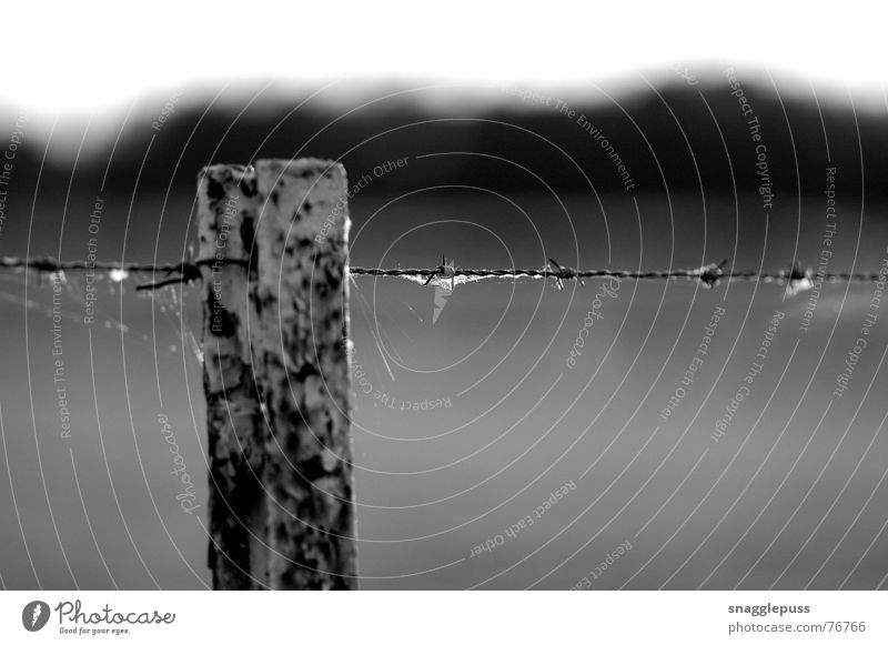 bokeh Schwarzweißfoto fence barbed wire Unschärfe black white