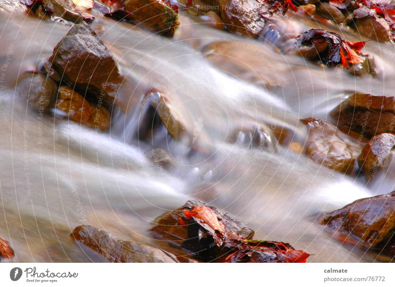 - herbststimmung - Bach Herbst Blatt mehrfarbig kalt Jahreszeiten Langzeitbelichtung Wasser Stein Fluss