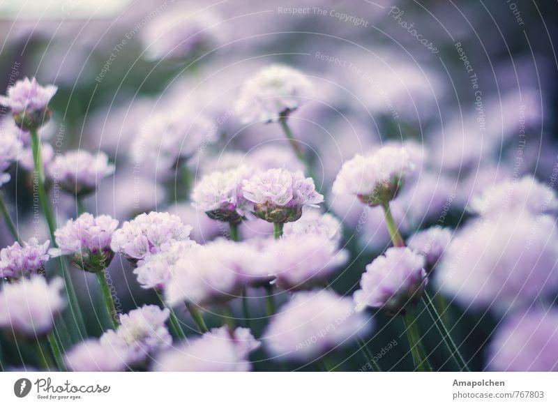 ::14-15:: Natur Pflanze Sommer Erholung Blume Landschaft ruhig Tier Wald Umwelt Leben Wiese Frühling Gras Garten Park
