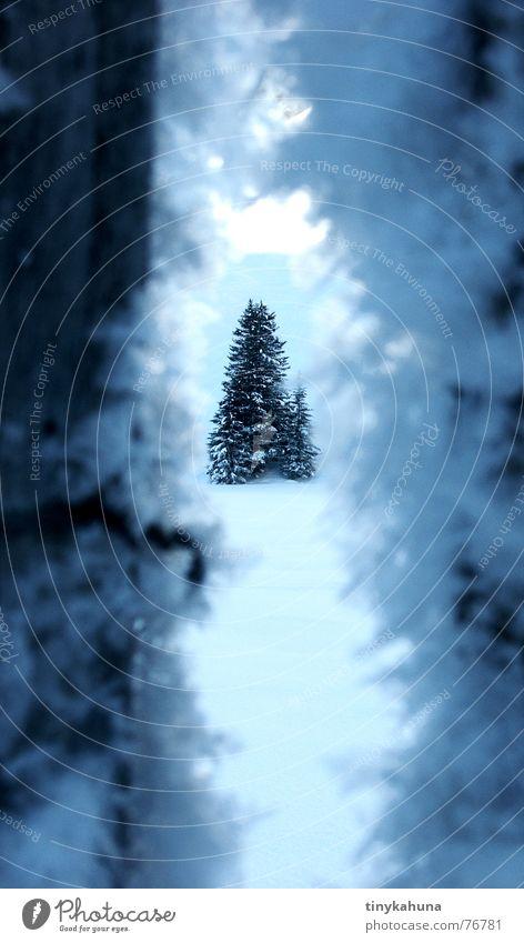 Durch einen Riss in einem dunklen Zaun Winter Eiskristall Schneekristall Tanne Fichte kalt weiß Frost Spalte blau tief