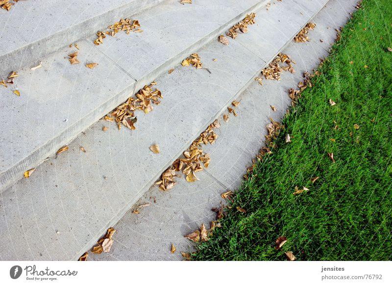 frühling Gras Herbst Blatt Jahreszeiten Leidenschaft trist kalt grün grau Natur Treppe Rasen Stein stone seasons autoumn cold step leaf leafs