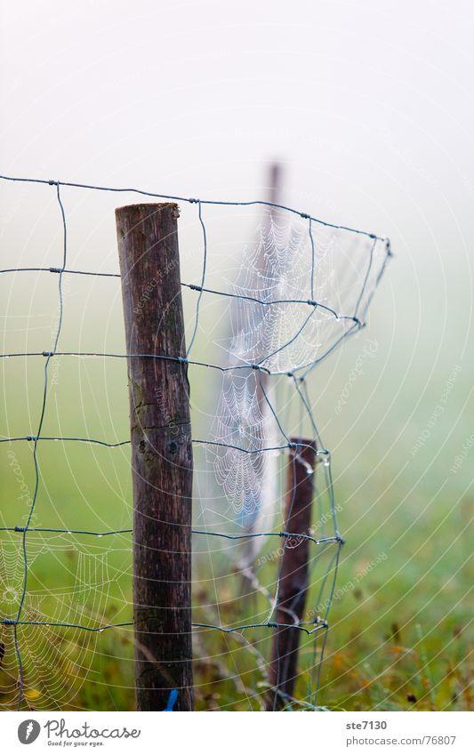 Zaun im Nebel Wiese grün Spinnennetz Herbst Morgen