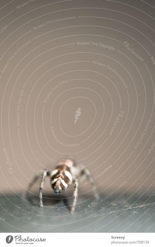 Ignorant! Natur weiß Tier braun Beine Angst Wildtier gefährlich Rücken krabbeln Nervosität Spinne winzig Spinnenbeine