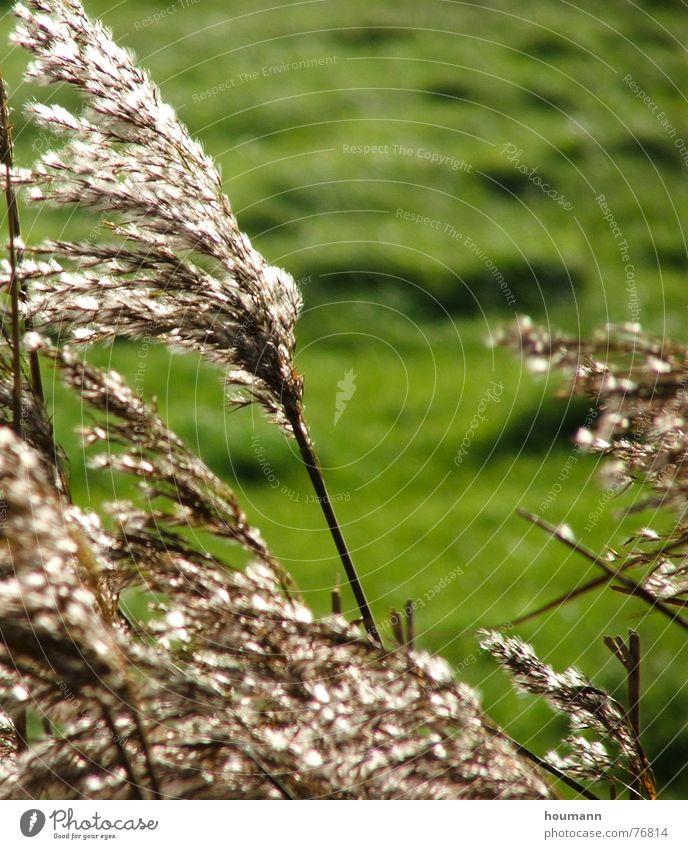 gegenlicht grün Sommer Wind Sumpf