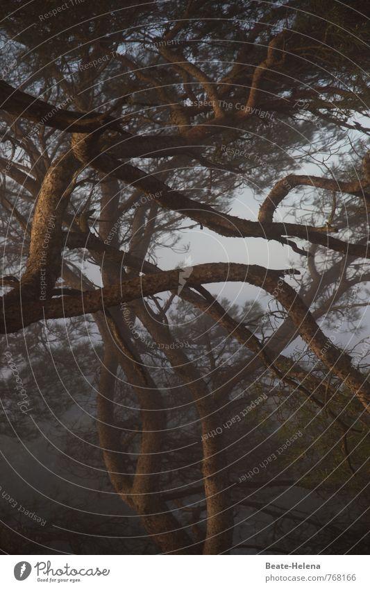 geheimnisvoll | Baum-Netzwerk Natur Sonnenaufgang Sonnenuntergang Schönes Wetter Wald Berge u. Gebirge Schlucht Insel Mallorca Zeichen Umarmen außergewöhnlich