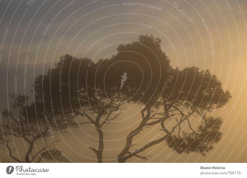 Zwielichtig Himmel Natur Ferien & Urlaub & Reisen blau Pflanze Sommer Baum Erholung Landschaft Wolken Ferne schwarz gelb Freiheit Stimmung Wetter