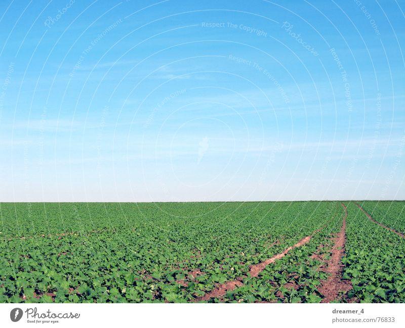 hinter dem Horizont Himmel Landschaft Feld Spaziergang himmelblau Spazierweg