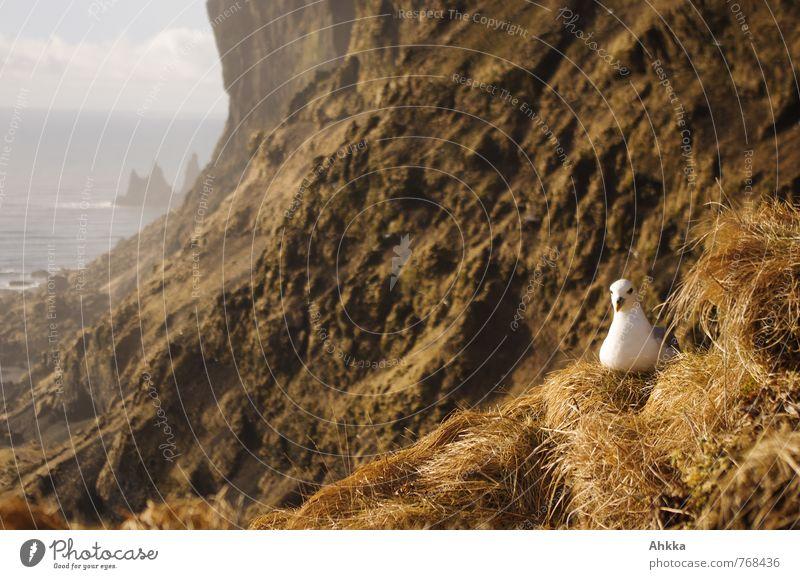 Brüter Natur Erholung Landschaft ruhig Ferne Leben Küste Felsen Stimmung Vogel Zufriedenheit Wildtier Insel beobachten Lebensfreude Abenteuer