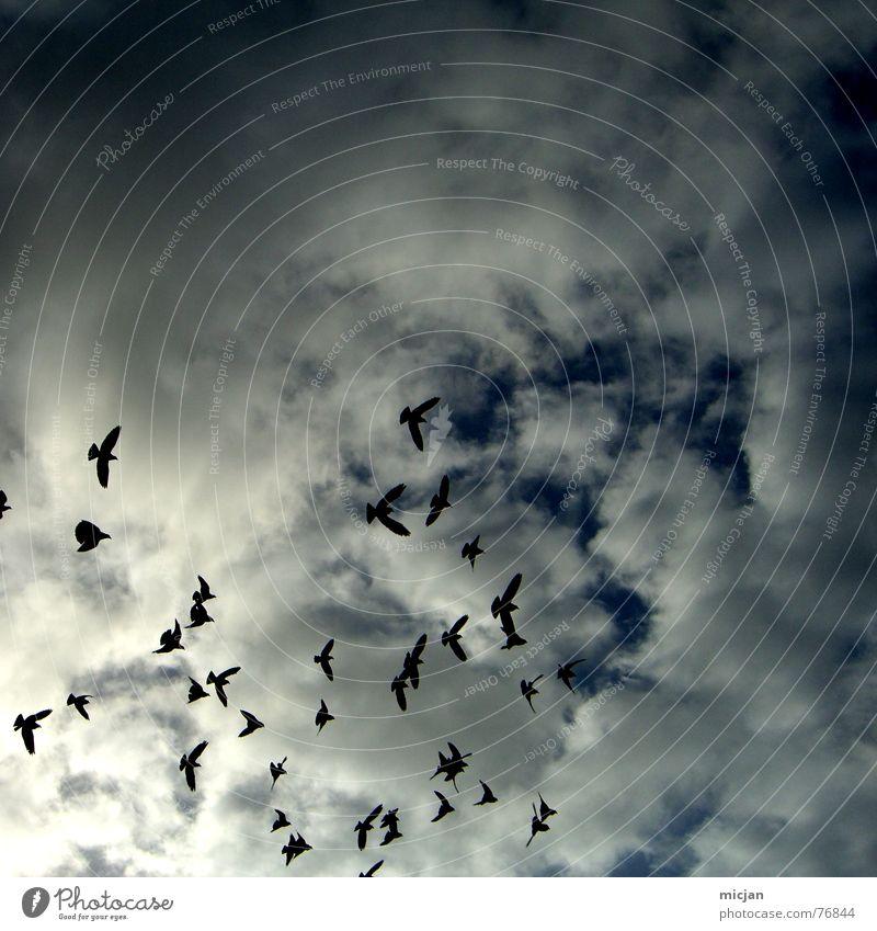 hell won't get us Himmel weiß Wolken Tier dunkel Umwelt oben Luft Vogel fliegen mehrere bedrohlich Unwetter Flucht Osten fliegend