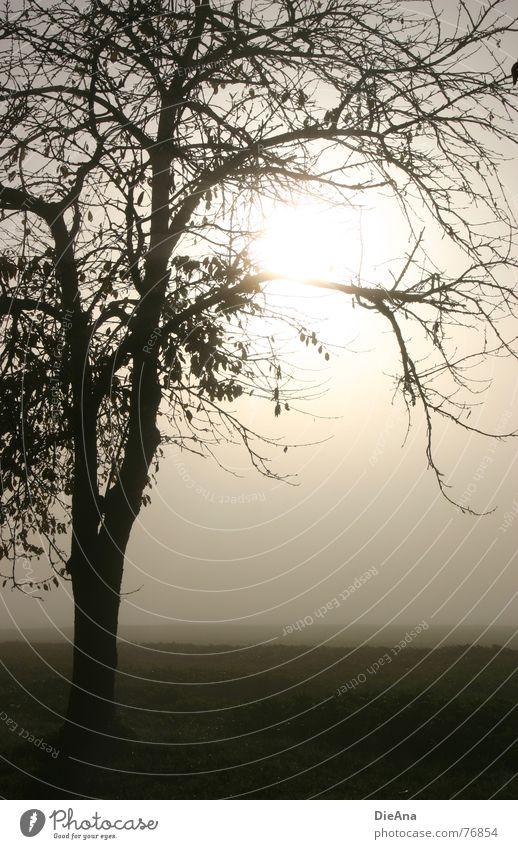 broken Natur Baum Sonne Blatt Wiese Landschaft Stimmung Feld Nebel Ast Oktober