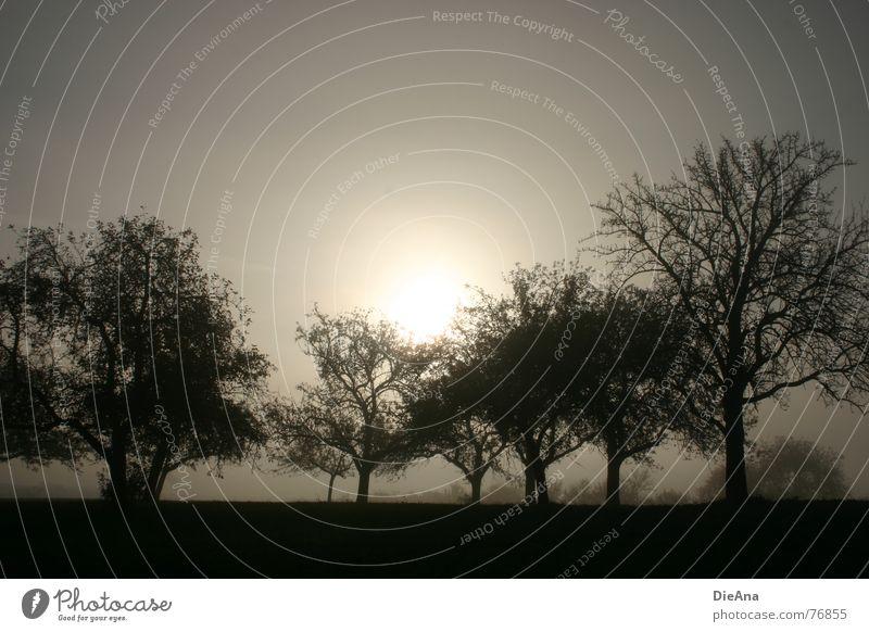 aufgefangen Natur Baum Sonne Blatt dunkel Herbst grau Nebel trist Obstgarten