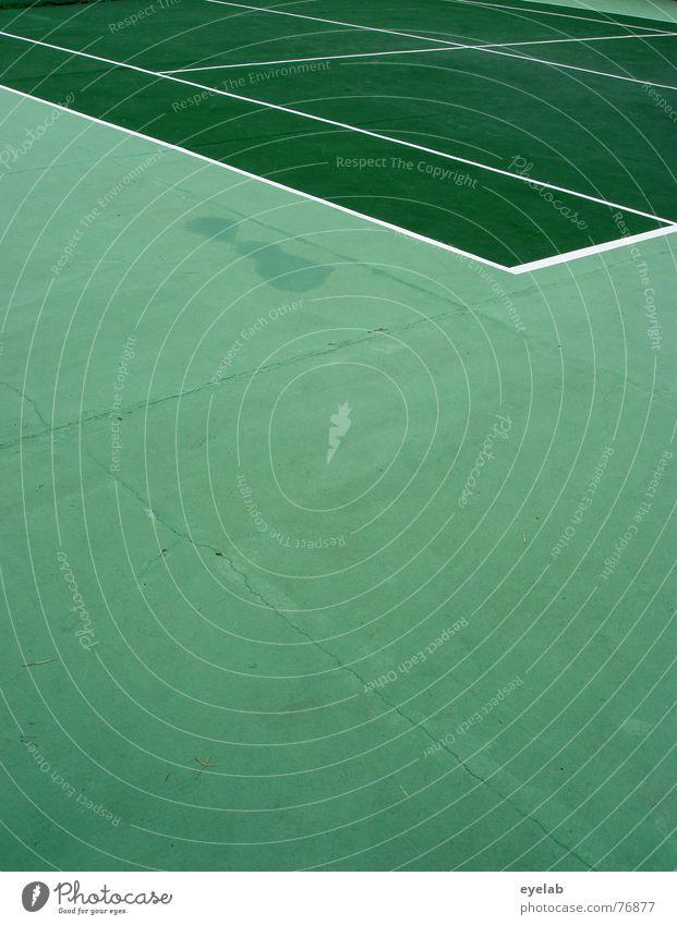 Betonrasen Hund grün weiß gelb Sport Spielen See Linie springen Erfolg Hoffnung Netz Sportveranstaltung Tennis Missgeschick Urin