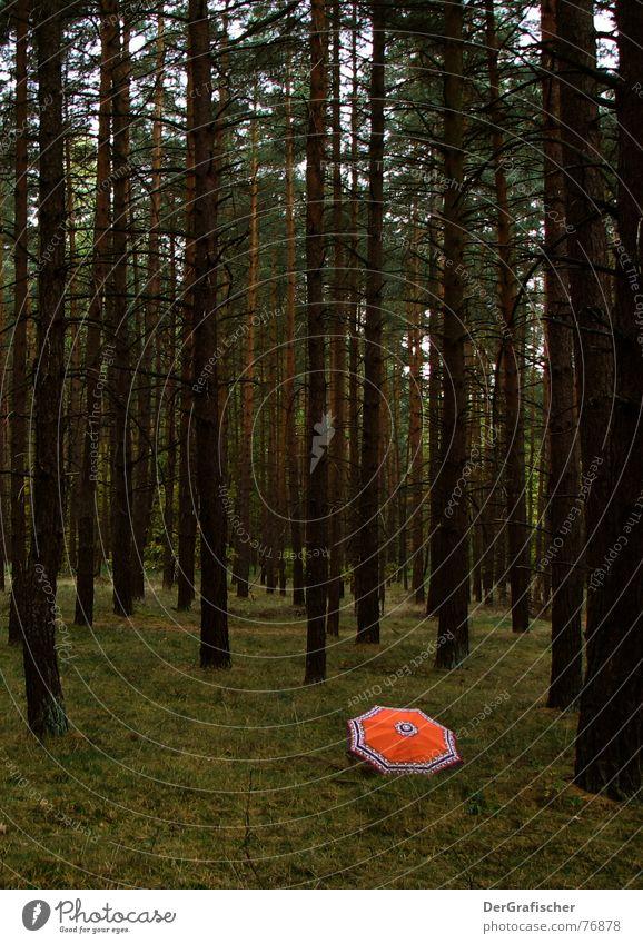 Speiserest Einsamkeit Wald dunkel Regenschirm gruselig verloren Kriminalität vermissen Märchen
