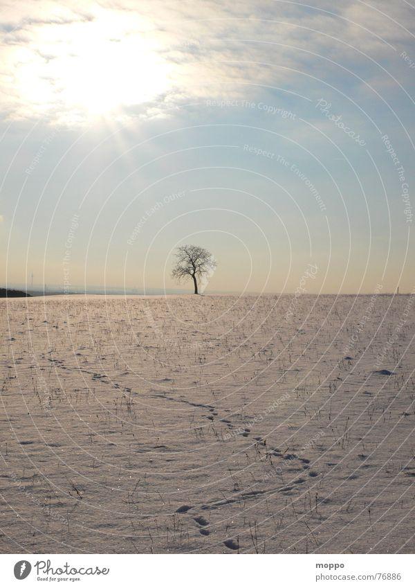 spuren im schnee Winter Wintersonne kalt Winterhimmel Baum Schnee Himmel Frost