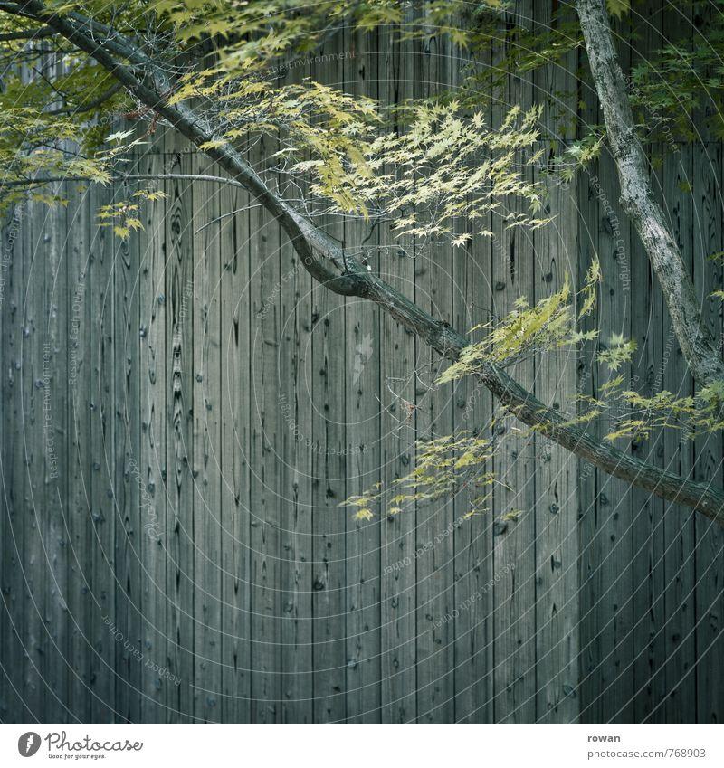 holzfassade Baum Blatt Haus Bauwerk Gebäude Architektur Mauer Wand Fassade grün Ast Zweig Japanischer Ahorn Holz Holzfassade vertikal grau Holzbrett parallel