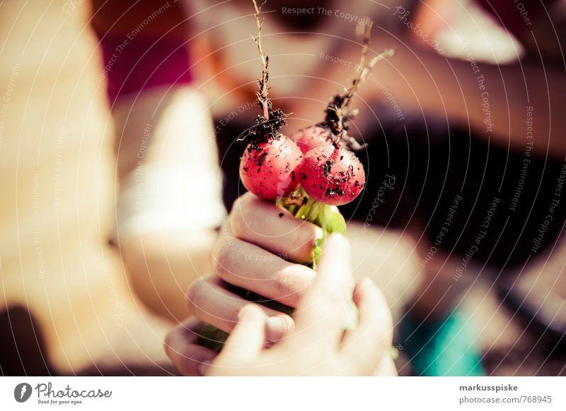 gemüsegarten urban gardening Radieschen Mensch Jugendliche Hand 18-30 Jahre Gesunde Ernährung Erwachsene Garten Lebensmittel Freizeit & Hobby Lifestyle Arme Finger Fitness Wandel & Veränderung Gemüse Wohlgefühl
