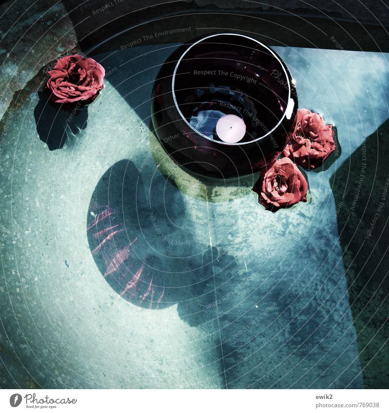 Seerosen Wasser Blume Rose Blüte Sammlerstück Schwimmen & Baden Teelicht Badewanne leuchten glänzend blau bordeaux Dekoration & Verzierung beweglich ästhetisch