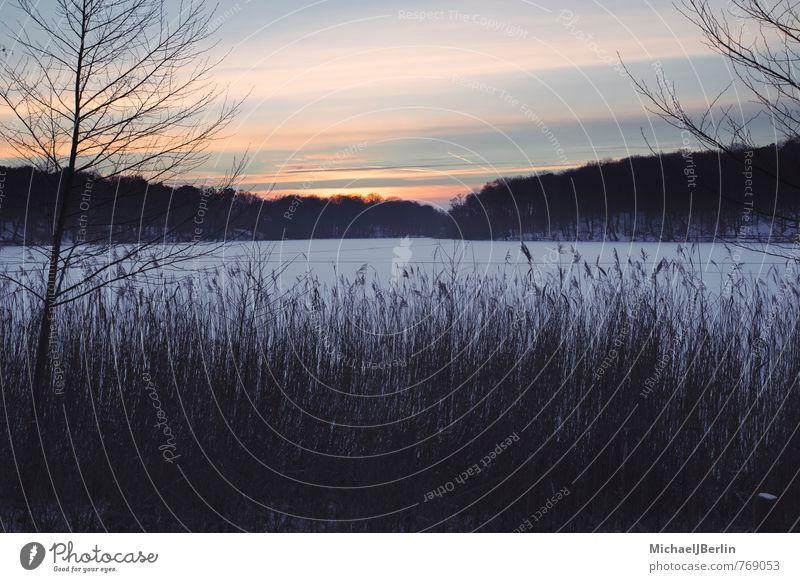 Sonnenuntergang im Winter, Schlachtensee Berlin Natur Sonnenaufgang Eis Frost Schnee kalt orange schwarz Deutschland Schnellzug Gras Schilf See Seeufer gefroren