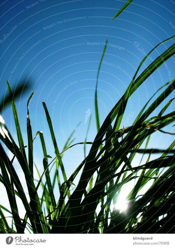 Hier kommt der Sensemann Gras Wiese Froschperspektive grün weiß Natur Durchblick Himmel Sommer tief unten Rasenmäher Wachstum Wind blau meadow Garten hoch sky