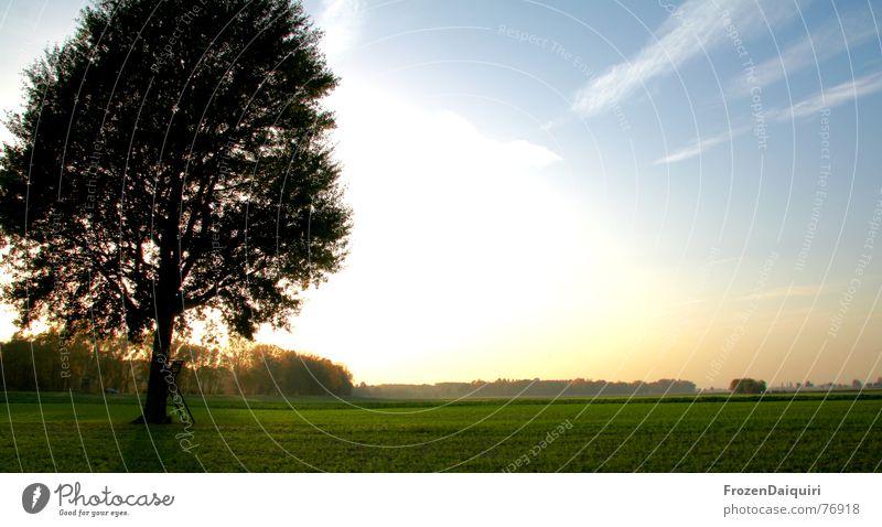 Glühender Baum No. 2 glühen Glut Gegenlicht Sonnenuntergang weitläufig Ferne Feld Gras grün HDR Wolken gelb Wald Donauland Bundesland Niederösterreich