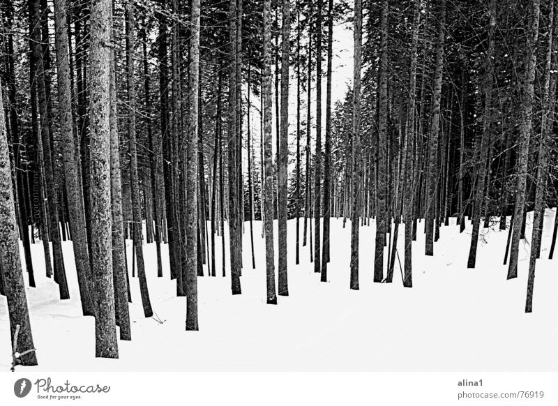 Kälte Baum Wald kalt Schnee Landschaft Ordnung Niveau frieren
